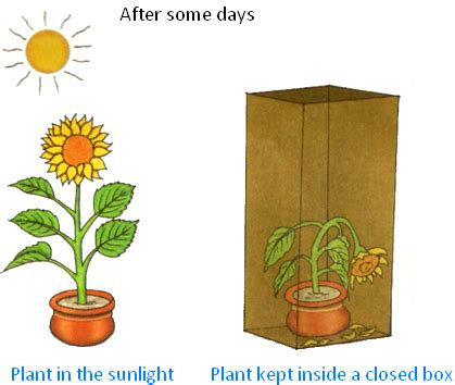 Why do living things need sunlight to survive? - eschooltoday